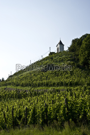 vineyards in maribor slovenia