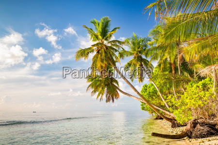 palm, trees, on, maldivian, beach - 16344715