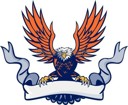bald eagle swooping spread wings scroll