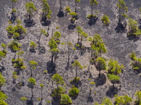 spain canary islands la palma fuencaliente