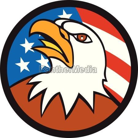 american bald eagle head looking up