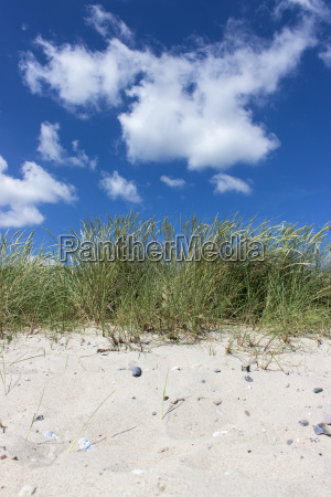 beach grass on the sandy beach