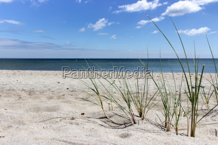 sandy beach with grasses at the