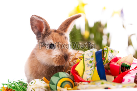 colorful rabbit with easter eggs on