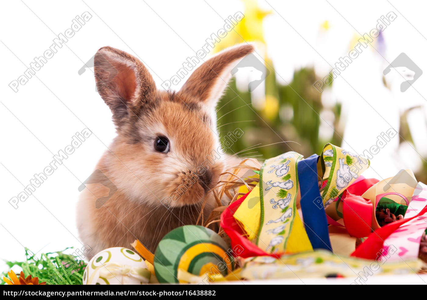 colorful, rabbit, with, easter, eggs, on - 16438882
