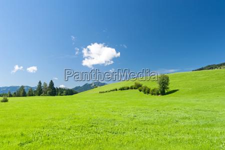 summer meadow in oberallgaeu
