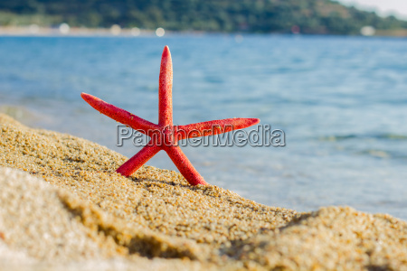 summer travel destination starfish on the