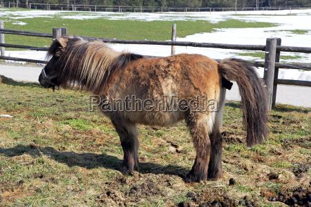 a pony makes perdeaepfel