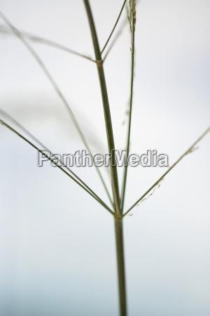wispy plant stem cropped view