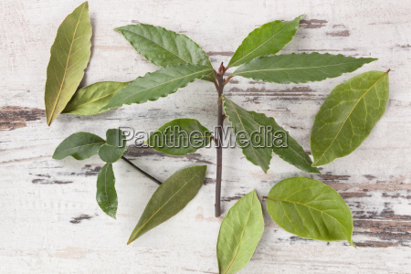 bay leaves on white wooden background