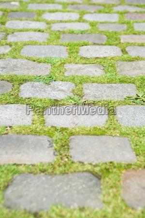 grass growing between paving stones full