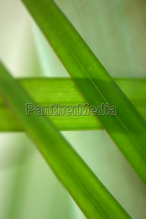 leaves close up