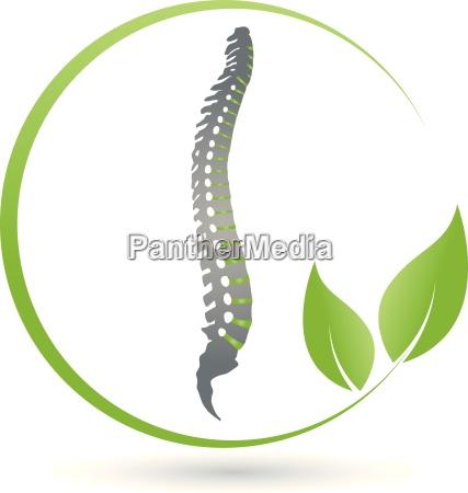 spine orthopedics chiropractors plant