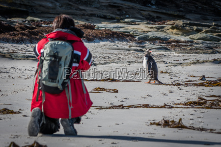 photographer shooting gentoo penguin on sandy