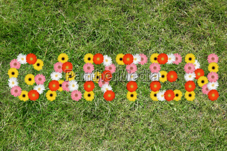 garden flower spring grass meadow lawn