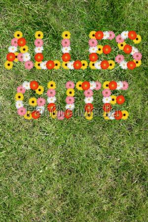happy birthday card wish from flower