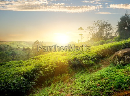 sun over nuwara eliya