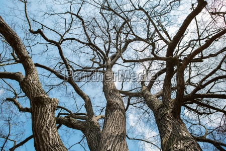 sky through the winter tree branches