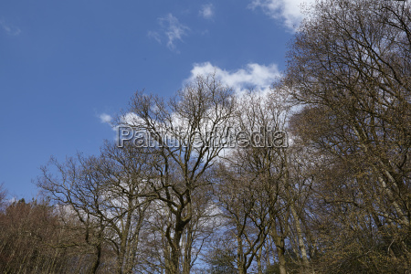 forest treetops towards blue sky