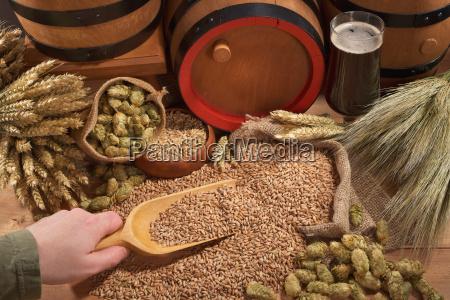 beer glass beer wheat hop brewery