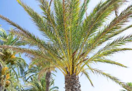 palm tree at summer day