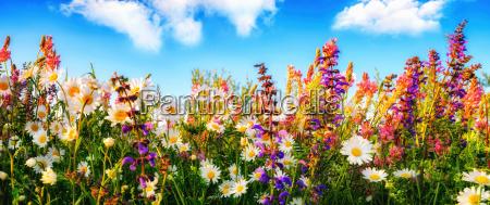 dense growing flowers on a meadow