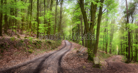forest path in the beautiful forest