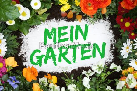 my garden gardening with flowers flower