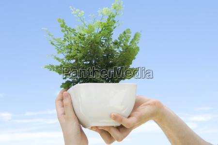 hands holding up maidenhair fern in