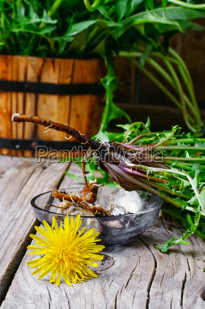 roots of dandelion flower