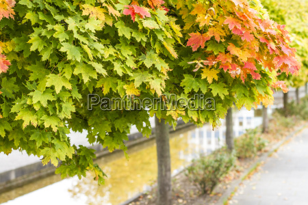 row of broad leafed trees in