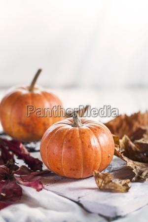 two miniature pumpkins cucurbita pepo and