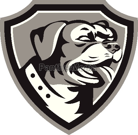 rottweiler guard dog shield black and