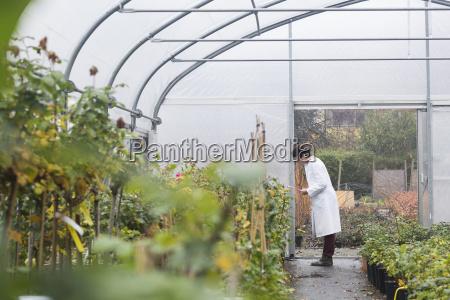 scientist in greenhouse examining plants
