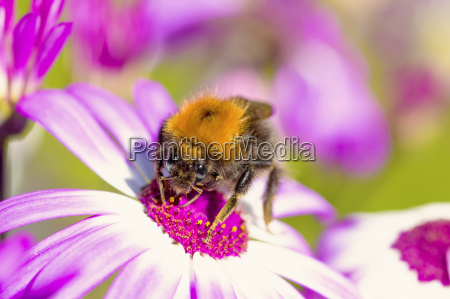 macro shot of bee on flower