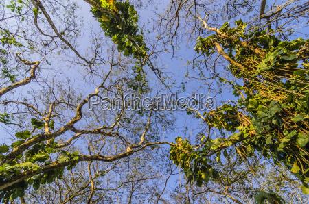 costa rica liana plants low angle