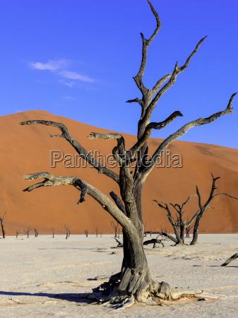 namibia namib naukluft dead vlei dead