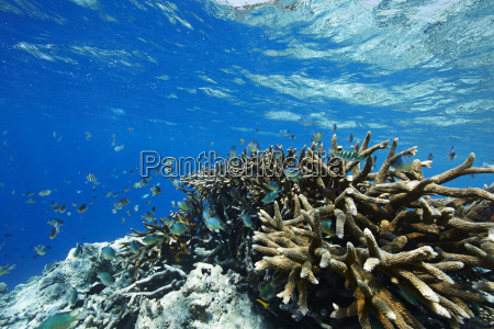 maldives corals and fish in the