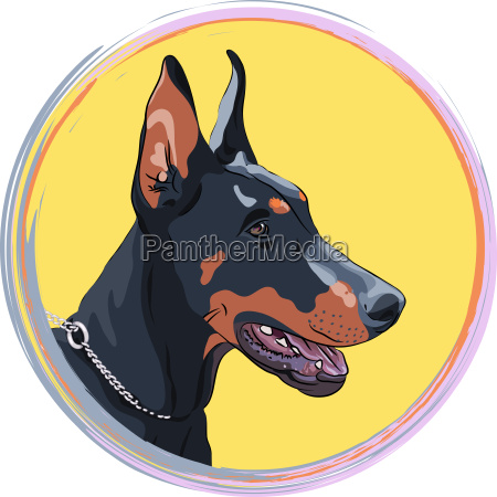 vector closeup serious dog doberman pinscher