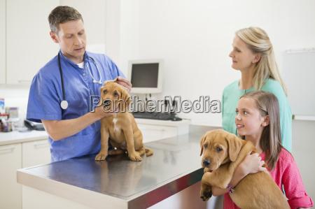 veterinarian examining dog in vets surgery