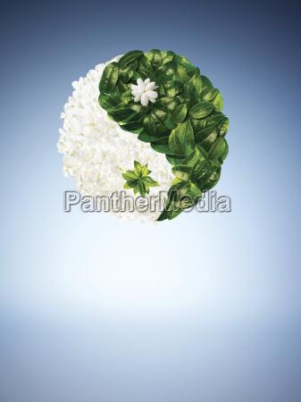 illustration of leaves in yin yang