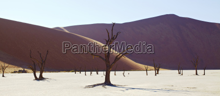 view of sand dunes and camel