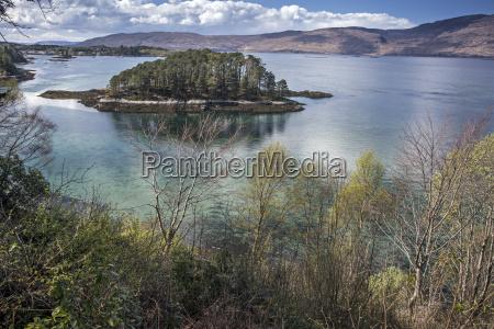 trees on small lake island loch