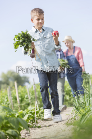 boy carrying harvested vegetables in sunny