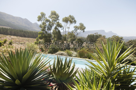 swimming pool with aloe plants in