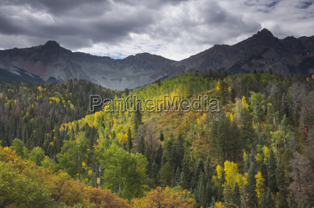 green and yellow autumn trees on