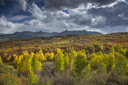 clouds over yellow autumn trees in