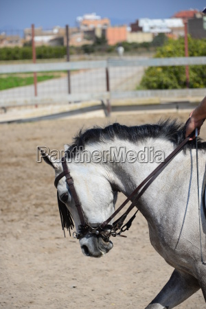 horse couple horses mammal spain summer