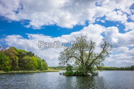 tree in lake koelpin on the