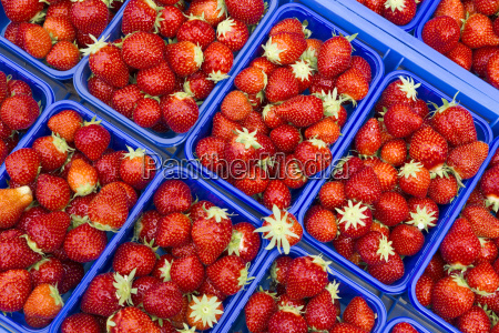 fresh strawberries on the weekly market